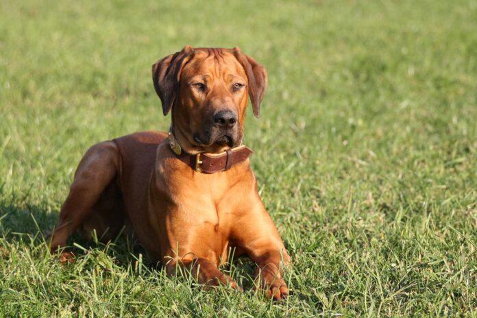 U akciji policija otkrila Zagrepčanina zaposlenog u Europskom parlamentu koji je silovao pse na Knežiji