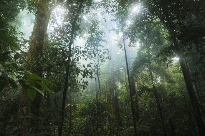8 savjeta britanskih vojnika kako preživjeti džunglu