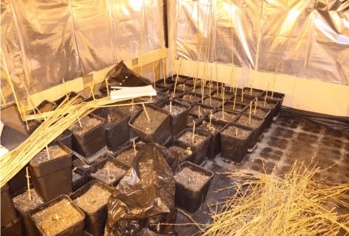 U obiteljskoj kući pronađen improvizirani laboratorij s umjetno stvorenim uvjetima za uzgoj marihuane